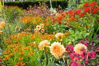 Helenium, Crocosmia and Dahlia in hot summer border