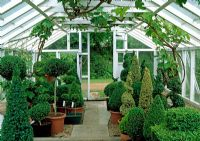 Interior of the greenhouse full of topiary specimens - River Garden Box Nursery