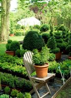 View of the sales area with Buxus peacock on wooden chair and young and mature topiary - River Garden Box Nursery