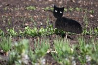 Cat silhouette amongst seedlings to scare birds