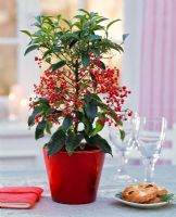 Ardisia crenata on table with plate of pastries and glasses