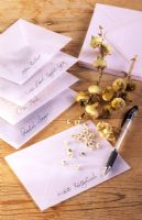 Saving seed from Alcea rosea in envelopes