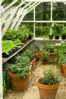 Interior of greenhouse with Fuchsias and other plants in pots