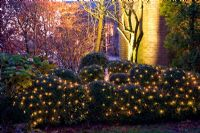 Buxus spheres with winter lights
