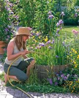 Woman filling barrel with Iris sibirica, laevigata and Iris pseudacorus with water, Trollius europaeus and Geranium in the border beside