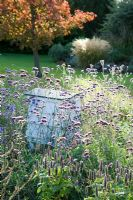 Bee hive in border with Verbena bonariense - Cambridge Botanic Gardens