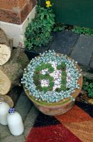 Grow your own house number. Houseleeks, Sempervivum, form the number 61 and are edged with Sedum spathulifolium 'Cape Blanco' in a terracotta pot mulched with fine chippings