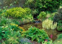 Waterside planting with Iris, Primula, Mysotis, Euphorbias and Trollius