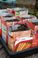 Sowing carrots into old milk cartons