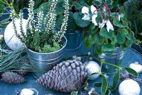 Frosty white Erica and Cyclamen in containers with pine foliage, cones and silver baubles