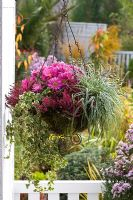 Hanging basket lined with moss and planted with Chrysanthemum, Carex conica 'Tamago', Calluna 'Athene' and Hedera 'Mini-Ester' on balcony