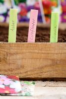 Plant labels in edge of seed tray to identify recently sown flower seeds.