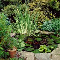 Garden pond in town garden - Barnet, London