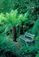 Seat in woodland area with Dicksonia antartica tree fern - Tipton Lodge, Devon, UK