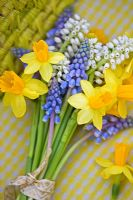 Bunch of Narcissus 'Tete-A-Tete' with white and blue Muscari