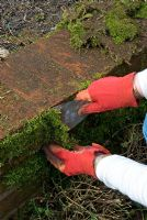 Woman removing moss from brick wall of raised beds