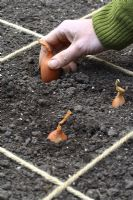 Man planting shallots in beds designed for square foot gardening