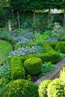 Clipped Box hedge with Nepeta officinalis, Salvia sempervirens and Pittosporum