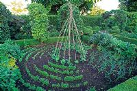 Formal vegetable garden with cane wigwam support for climbing beans, beds of onions, parsley, chives and artichokes