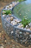 Small gabion cages with pebbles surrounding a water feature and planted with Bellis perennis