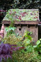 Old wooden privy shed with living roof of Sempervivum. Planting includes Nandina domestica and Acer palmatum 'Bloodgood' - 'Moving On...', Best Courtyard Garden and Gold Medal winner, RHS Chelsea Flower Show 2007