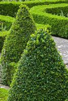 Clipped Buxus sempervirens pyramids