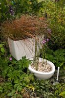 Toilet used as planter with Stipa Pelargonium