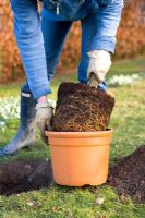 Step by step guide to planting containerised fruit trees in to open ground - Remove the tree from its pot and lower it into the hole. Make sure that the union mark on the trunk, and is at least 5cm above the ground, then fill the hole with soil.