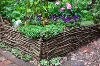 Hazel screen fencing a raised bed of herbs and medicinal plants in The Pilgrims Rest Garden, sponsered by 1066 Country - Silver-Gilt Flora medal winner for Courtyard Garden at RHS Chelsea Flower Show 2009