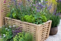 Oak planter with planting including Borage officinalis, Golden marjoram and Salvia
