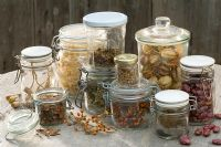 Collected dried seeds in glass jars - Papaver, Rosa, Nigella, Datura and Phaseolus