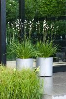 Libertia grandiflora in silver containers - The Daily Telegraph Garden, sponsored by the Daily Telegraph - Gold medal winner at RHS Chelsea Flower Show 2009 for Best in Show