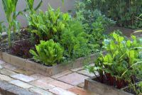 Organic vegetables in raised beds designed for square foot gardening - Beetroot, lettuces, salads, carrots, sweetcorn and broad beans