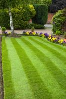 Striped mown lawn with border of yellow and blue pansies