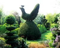Topiary peacock in topiary garden - Charlotte Molesworth's garden, Kent