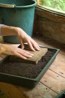 Step by step 2 of sowing tomato seeds - Levelling and firming compost
