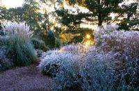 Frost covered grasses and seedheads of perennials including Pennisetum alopecuroides 'Hameln', Verbena bonariensis, Miscanthus sinensis 'Ferner Osten' and Cortaderia selloana 'Sunningdale Silver' in the Decennium border at Knoll Gardens, Dorset. November.