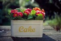 Pink and orange polyanthus in cake tin