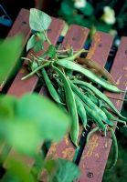 Runner beans picked on wooden slatted chair