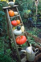 Pumpkins and squash on old wooden ladder