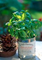 Basil in french tin container on windowsill