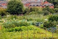 Allotments in Exwick, Exeter