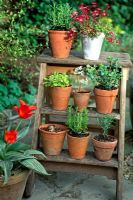 Pots on Wooden Steps