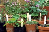 Plants in clay pots with price labels