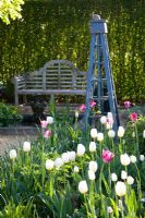 Wooden bench with Tulips 'Inzell' and 'Mata Hari' with blue obelisk