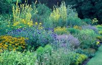 Blue and Yellow herbaceous border with Verbascums, Achiillea filipendulina, Echinops ritro, Heleniums, Nepeta and Nicotiana -  Fellows' Garden, Clare College, Cambridge