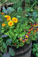 Edible flowers, herbs and vegetables growing in a wooden barrel - Calendula 'Fiesta Gitana' with 'Little Gem' lettuce, dill, purple Brussels sprouts and an edging of Viola 'Royal Sovereign'