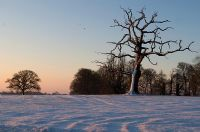 Winter morning sunrise and oak tree - Cuckilington, Dorset