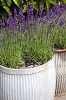 Gap Gardens Roof Terrace At 21a Feature By Suzie