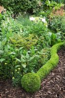Buxus sempervirens - Box snake edging a border